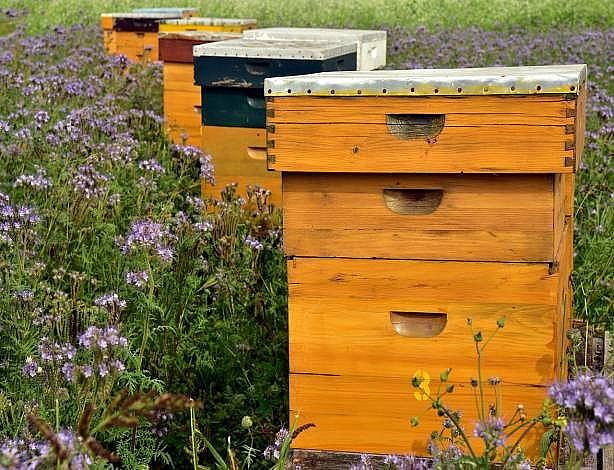 dolcamar-casetes-consultoria-apicola
